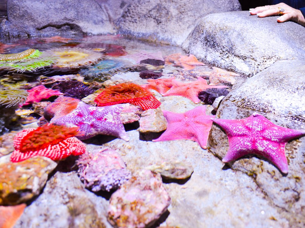 Aquarium of the Pacific Los Angeles